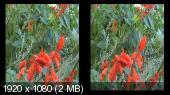 Природа Джубги и Тенгинки в 3Д / 3D Горизонтальная анаморфная