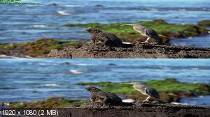 IMAX. Галапагосы / IMAX. Galapagos: The Enchanted Voyage