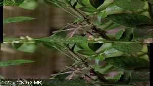 ����! (�������!) 3� / Bugs! 3D ������������ ����������