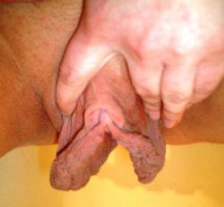 Порно приколы. Формы половых губ женщин могут быть настолько