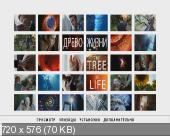 ����� ����� / The Tree of Life (2011) DVDRip