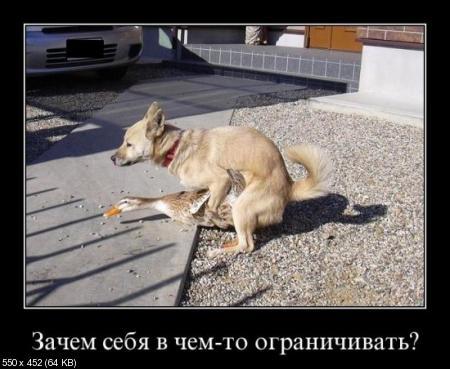Свежая сборка демотиваторов от 05.12.2011
