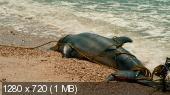 История дельфина / Dolphin Tale (2011) BDRip 720   Лицензия