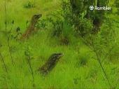 Затерянные миры. Земля драконов / Mundos Predidos.Tierra de Dragones (2000) TVRip