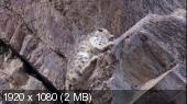 Планета Земля: Львы пустыни & Снежные леопарды (Blu-Ray 1080i)