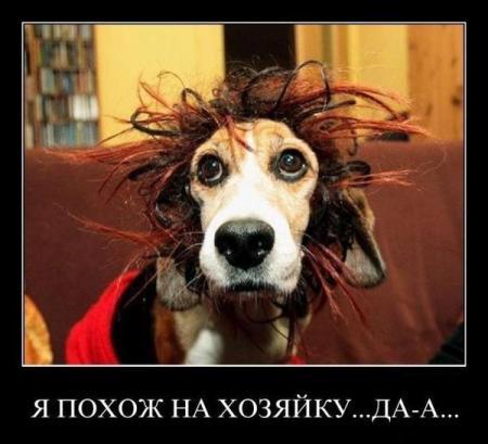 """Демотиваторы """"101 %"""" от 12.01.2012"""