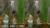 Аквариумные рыбки в 3D Горизонтальная анаморфная