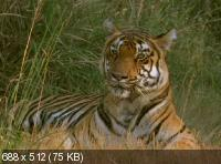 BBC: Жизнь животных - Плотоядные / BBC: The Wildlife Specials (1997-2003) DVDRip