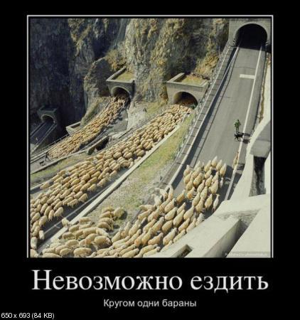 Свежая сотка демотиваторов (2012)