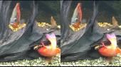 Экскурсия в аквариуме и террариуме (дельфинарий Немо). в 3Д / 3D Горизонтальная анаморфная