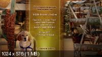 Пятерка кладоискателей / Treasure Buddies (2010) DVD9 + DVD5